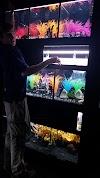 Image 8 of Aquarium Adventure, Hilliard