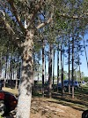 Image 6 of Northwest Recreation Complex, Apopka