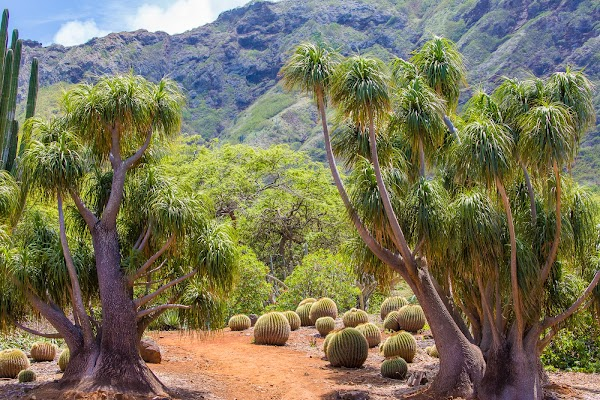 Popular tourist site Koko Crater Botanical Garden in Honolulu