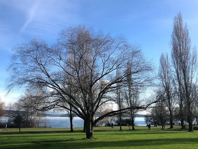 Warren G. Magnuson Park