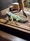 Image 5 of Winking Lizard, Macedonia