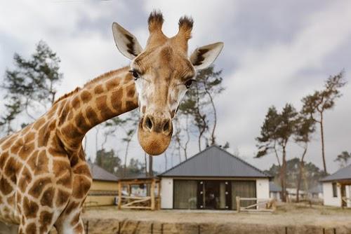 Safaripark\u0020Beekse\u0020Bergen