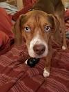 Image 7 of Union County Humane Society, Marysville