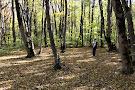 Alti Aghaj National Park