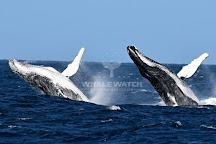 Whale Watch Western Australia, Augusta, Australia