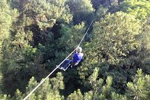 Perching Adventure - Parc Accrobranche de Verzy, Verzy, France
