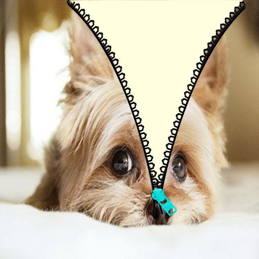 Pet cute unlock zipper