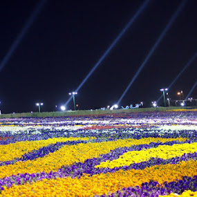The incredible flower fest in desert by Kaushik Nandy - Nature Up Close Gardens & Produce