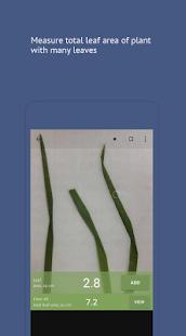 Petiole 2: Leaf Area - náhled