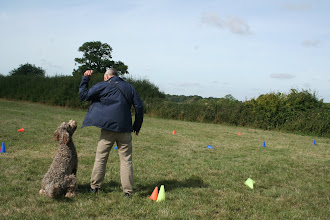 Photo: DogBasics Fun Day 2013 - Brian Labradoodle and Paul plaing The Crazies game.
