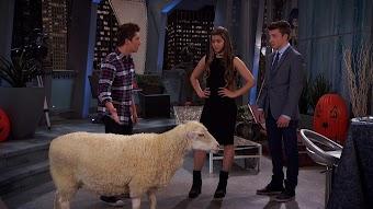 Sheep-Shifting