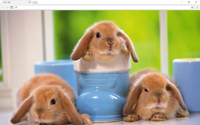 Bunnies New Tab & Themes