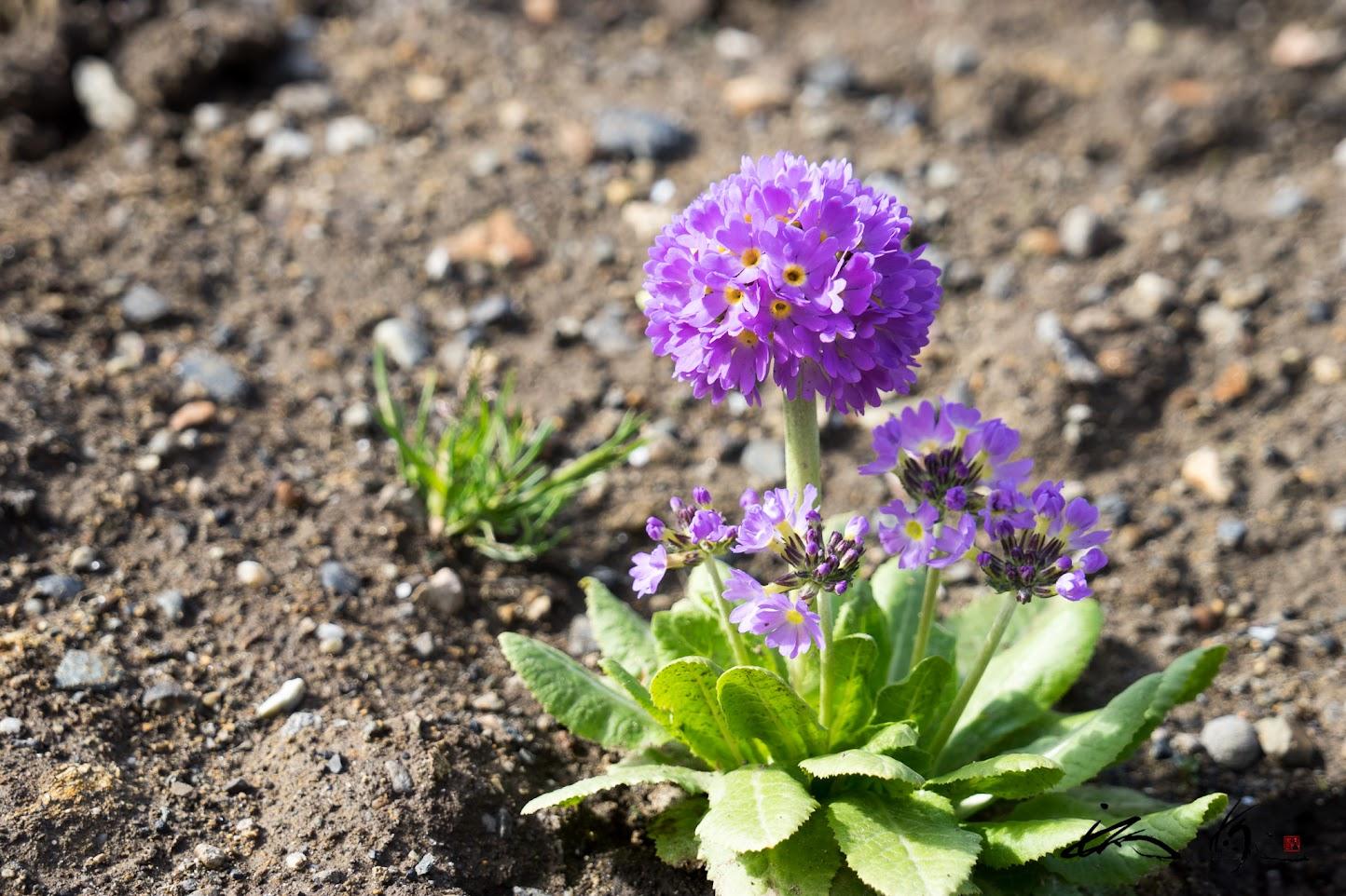 力強い生命力が宿る小さなお花