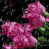 Lovely Rainy Roses LWP Android APK Download Free By Daksh Apps