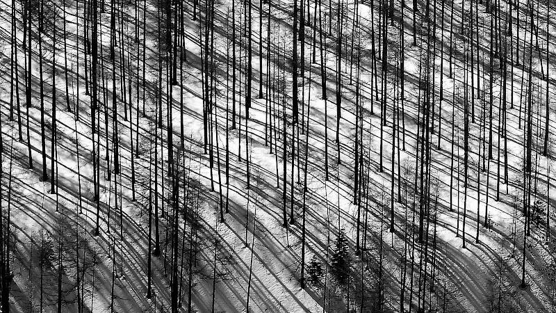 Linee e curve di mario chiaiese foto