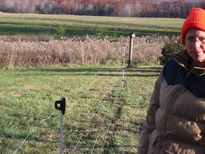 Photo: View of fence - the only wooden posts are on the corners - other than that the little plastic posts hold up the wire.