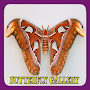 Butterfly Gallery APK icon