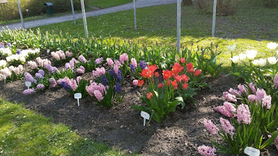 Photo: F4231924 w Ogrodzie Botanicznym