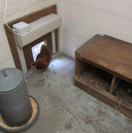 Hier is het kippenrolluikje geplaatst in een kippenhok in betonplaten.