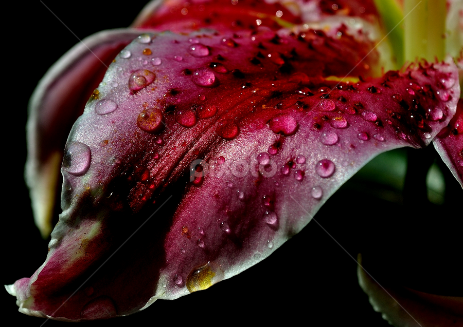 by Mihaly Istvan - Nature Up Close Flowers - 2011-2013