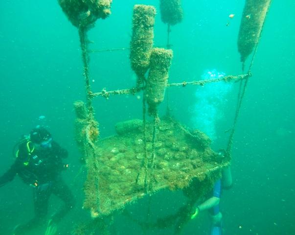 raising corals costa rica