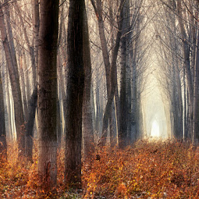 by Boris Bajcetic - Landscapes Forests