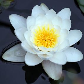 Today 07/31/2012 by Lauren Manzano - Flowers Flowers in the Wild