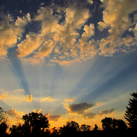Good Morning by Tina Dare - Landscapes Sunsets & Sunrises ( clouds, sky, trees, silhouettes, sunrise, landscape, sun rays, rays,  )