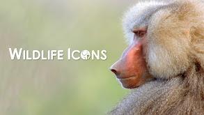 Wildlife Icons thumbnail