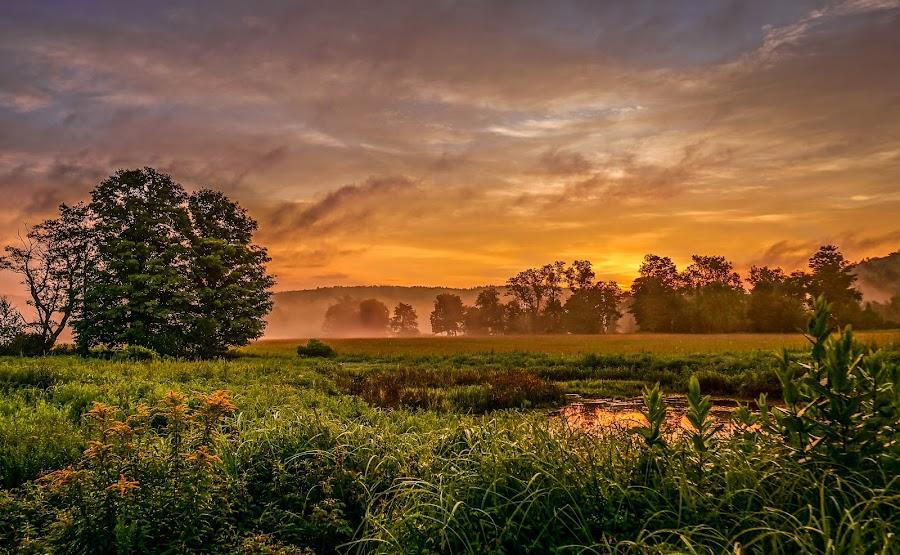 sunrise in the swamp  by Iliya Mizkanov - Landscapes Sunsets & Sunrises ( #GARYFONGDRAMATICLIGHT, #WTFBOBDAVIS )