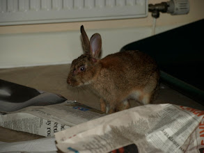 Photo: Bunny making a mess, sigh...