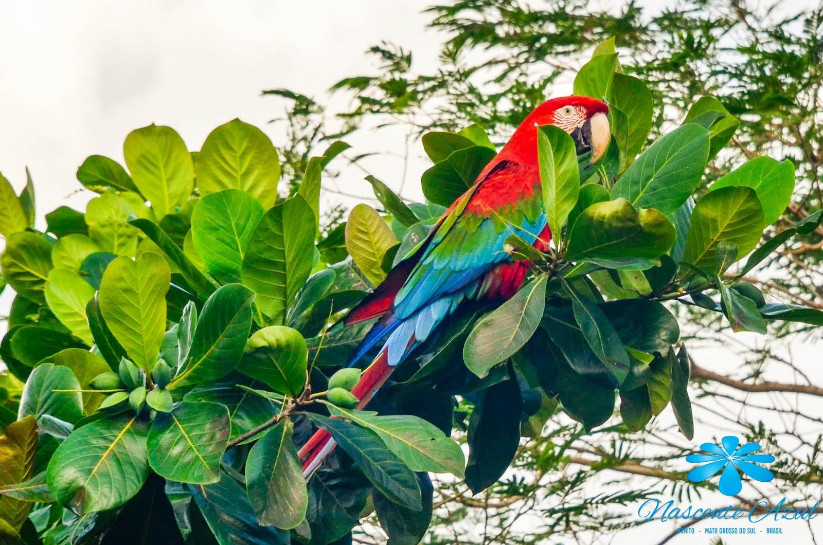 Fauna Bonito MS - Nascente Azul