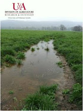 Photo: Runoff after rainfall event (spring 2012)