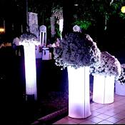 Wedding decorations in ahmedabad 163 wedding design studios the tulip touch junglespirit Images