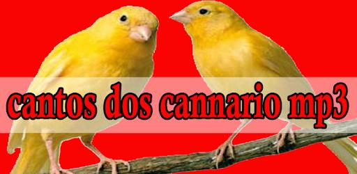 canto de canario da terra gratis mp3
