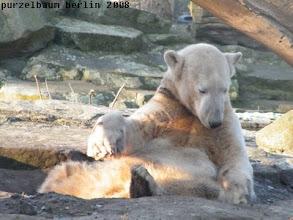 Photo: Entspannt wird die Schlafkuhle untersucht ;-)