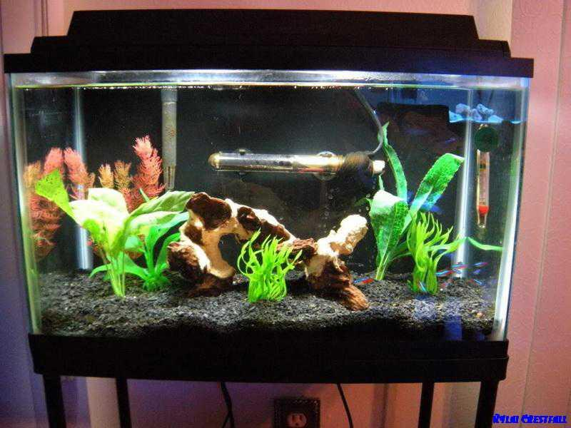 aquarium decoration project screenshot - Freshwater Aquarium Design Ideas