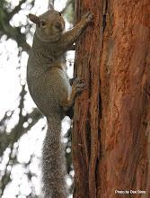 Photo: (Year 3) Day 23 - Squirrel in Golden Gate Park #2