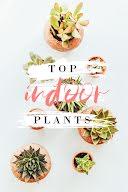 Top Indoor Plants - Pinterest Pin item