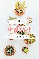 Top Indoor Plants - Pinterest Pin item