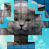 PicPu - Cat Picture Puzzle