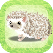 Hedgehog Pet