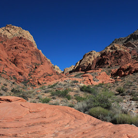 Red Rock Canyon by Diane Garcia - Landscapes Deserts ( red, mountain, green, blue, outside, hiking, desert )