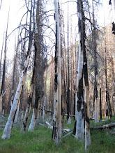 Photo: Palisade Creek fire