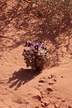 Photo: pustynna roślinność