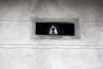 Photo: Day 85 - Dog with His Letter-Box Window in the Town of Orjahovo