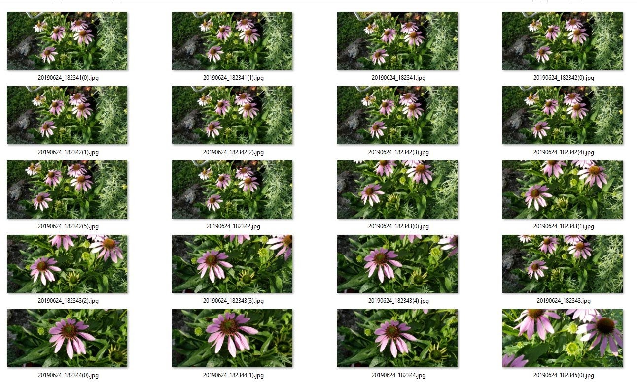 Purple cone Flowers Zip file is available for purchase!