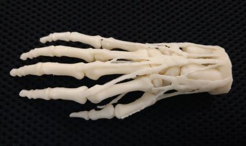 Напечатанная на 3D-принтере модель предназначена, чтобы понять строение костей руки.