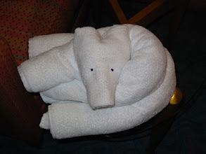 Photo: Towel Bear