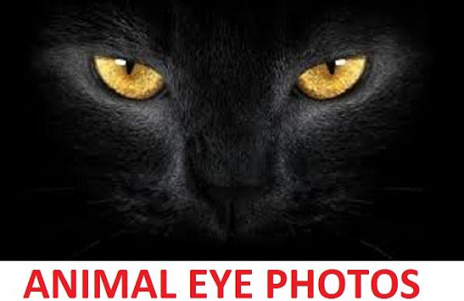 Animal Eye Photos
